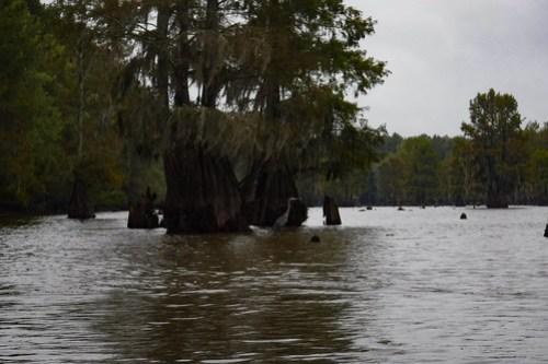 Sparkleberry Swamp with LCU-17