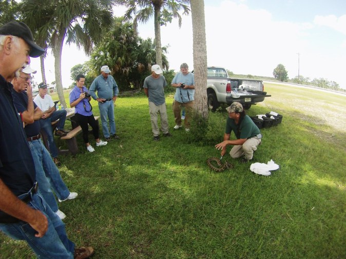 FWC Program Technician Jeff Fobb Demonstrates How to Hold a Burmese Python Before Bagging It, Big Cypress National Preserve, Fla. Oct. 24, 2015.