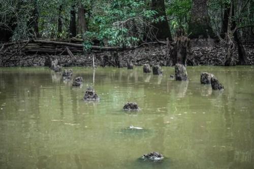 Sparkleberry Swamp with LCU-104