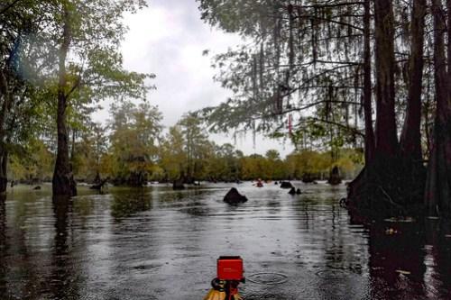 Sparkleberry Swamp with LCU-40