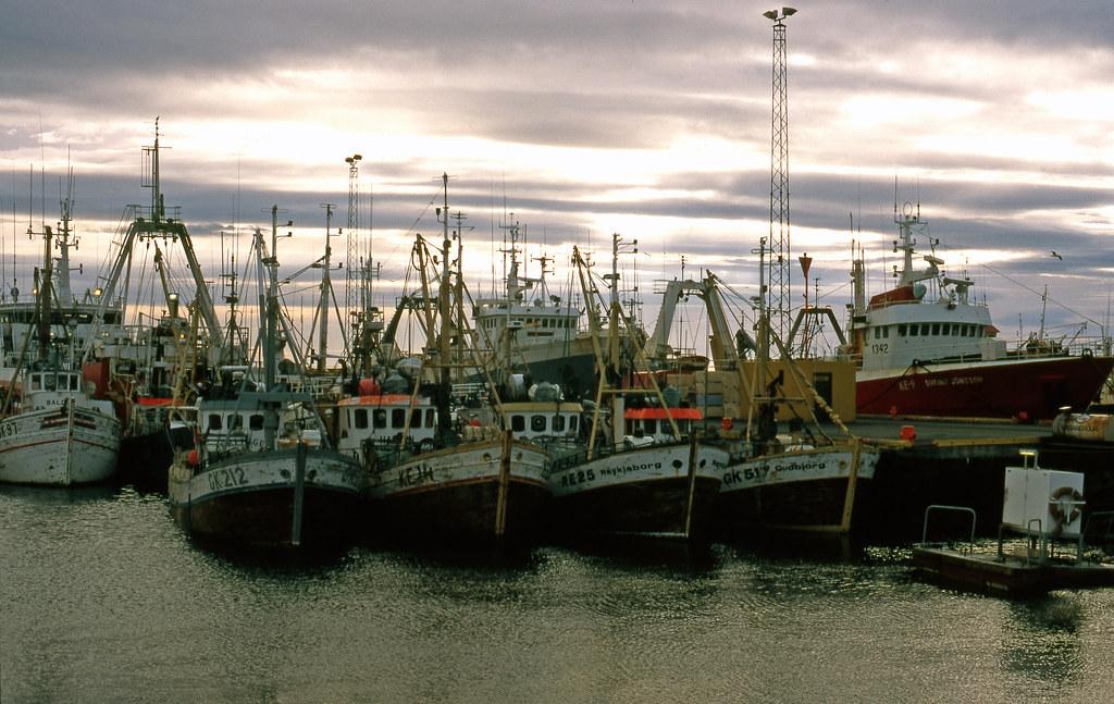 An Icelandic fishing fleet in harbour.
