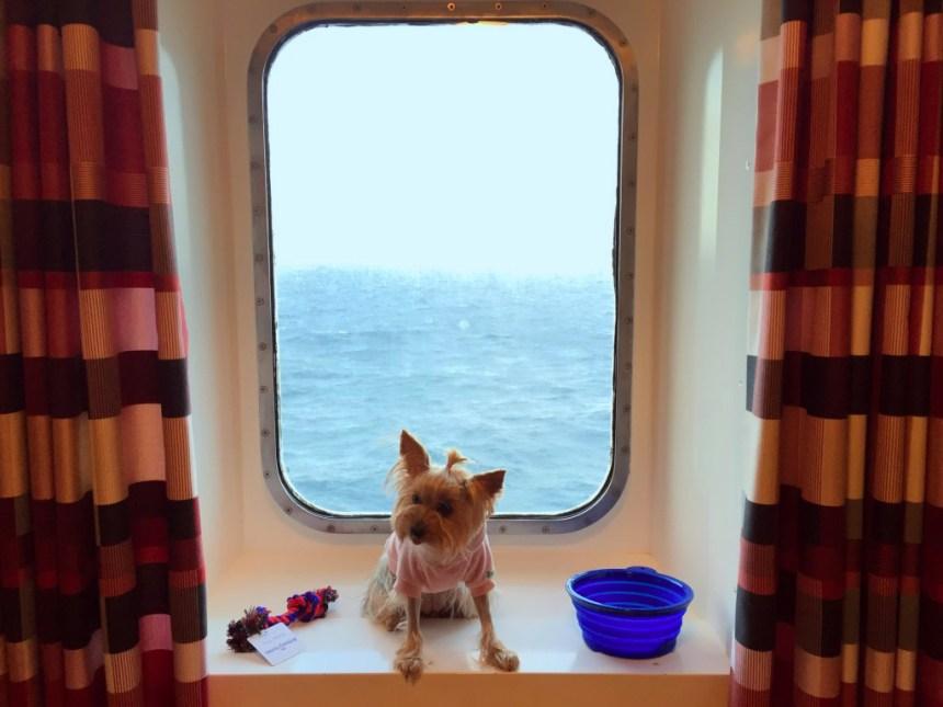 Viajar con mascotas a Reino Unido Viajar con mascotas a Reino Unido desde España Viajar con mascotas a Reino Unido desde España 23031217424 0aa5131d9c b