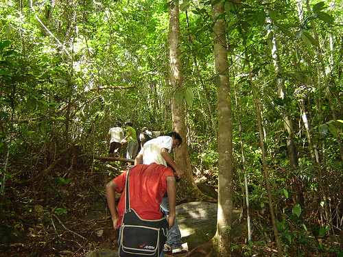 Sinharaja rain forest of sri lanka - trekking through mulawella trail