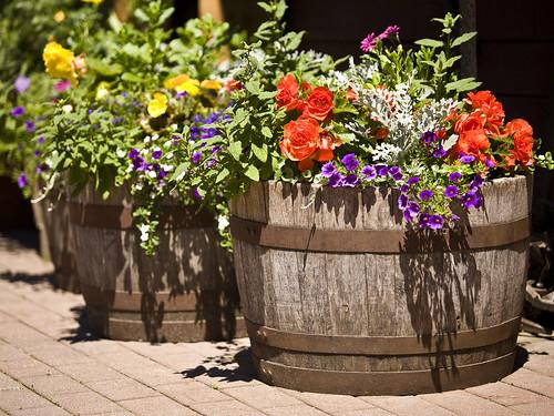 Barrel Planter Ideas