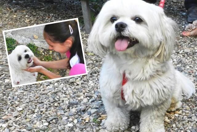momento giusto per adottare un cucciolo
