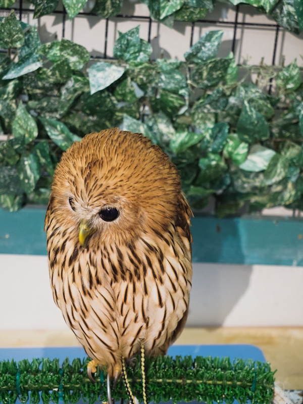 Lucky-Owl-Cafe-Osaka-29