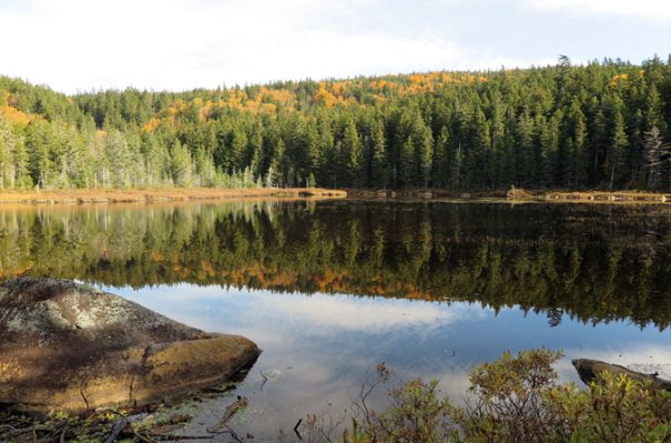 Saddleback AT Ethel Pond