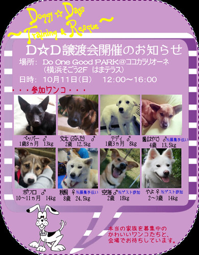 image151011-dd-adoption3 - コピー