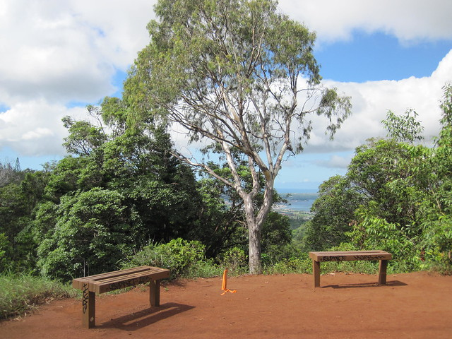 Picture from the Aiea Loop Trail