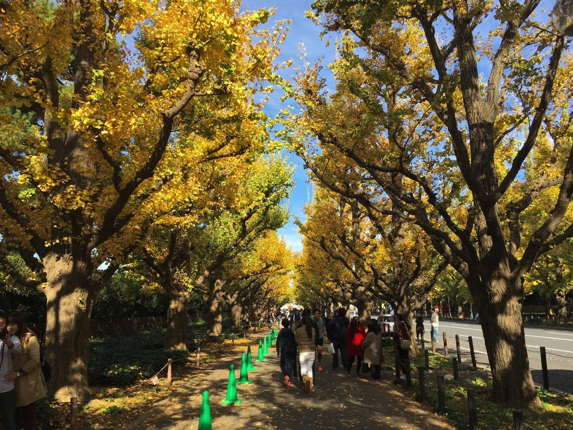 Meiji Jingu Gaien Autumn Colors