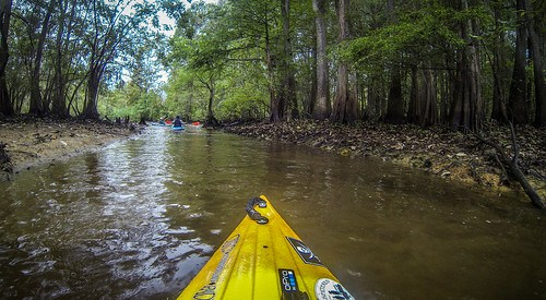 Sparkleberry Swamp with LCU-219
