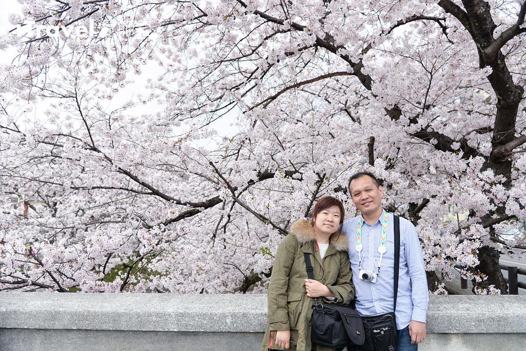 奈良赏樱景点 高田川千本樱 58