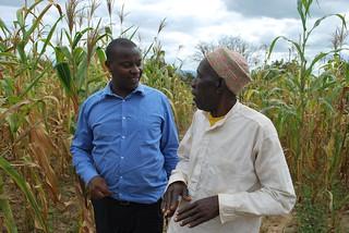 Francis Muthoni (left) talks to a farmer. Photo credit: Gloriana Ndibalema/IITA