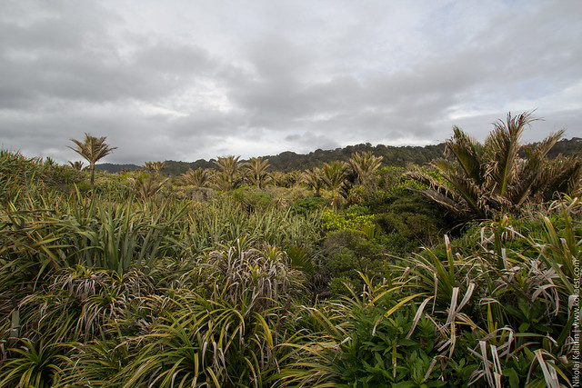 NZ_day9-87