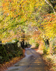 Autumn lane in the #LakeDistrict