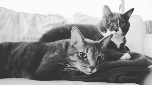 My boys ❤❤❤ #catsofinstagram #furrybabies #ilovemykitty #maxandrufus
