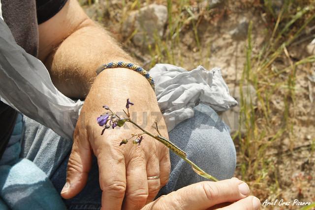Oruga - Desierto Florido