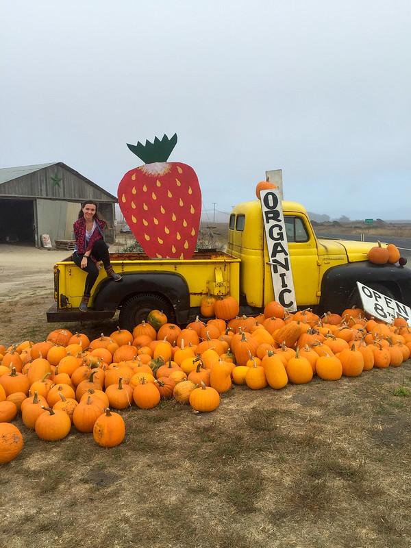 10.17. Pumpkins decoration near Swanton Berry farm