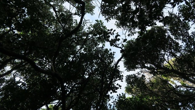 looking up through forest day 2 otter trail