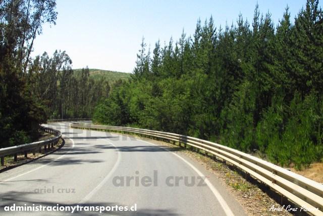 Ruta & Bosques de Pino - BZXP79