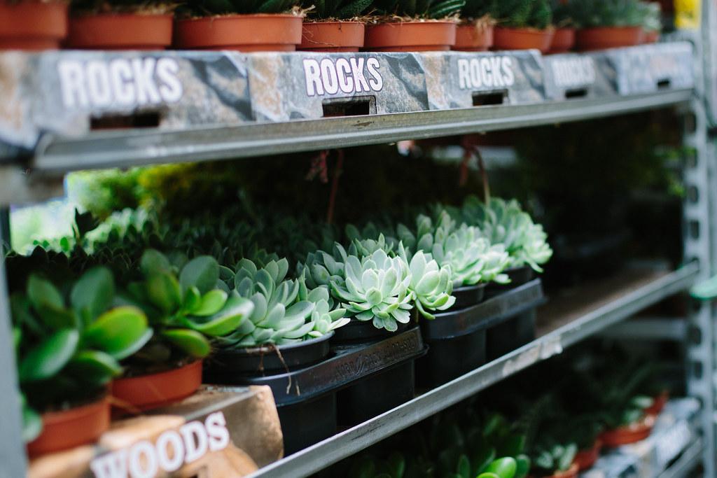 flower market succulents