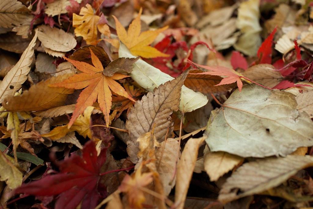 Imagen gratis de hojas de árbol en el suelo