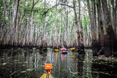 09-12-2015 Sparkleberry Swamp with Lowcountry Unfiltered