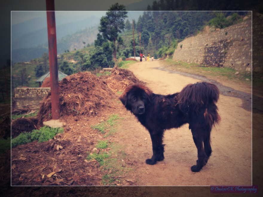 Hello, I am Himalayan Doggy ! Did you like my style ??