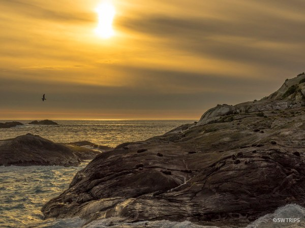 Seal Colony, Doubtful Sound