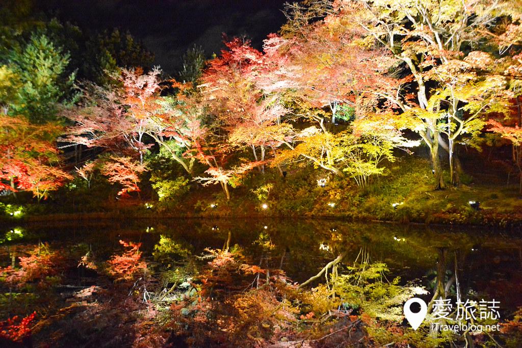 《京都赏枫景点》高台寺方丈庭园:夜晚红叶共舞光影展演