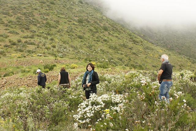 Cordillera de la Costa - Desierto Florido