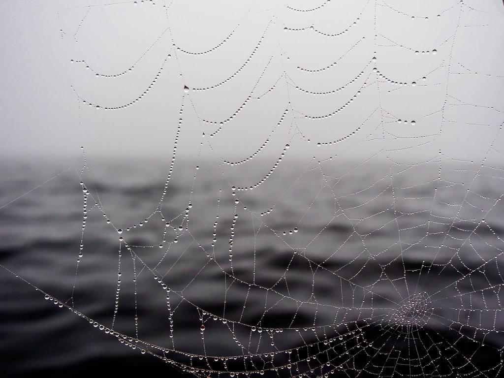 Imagen gratis de una tela de araña con gotas de agua