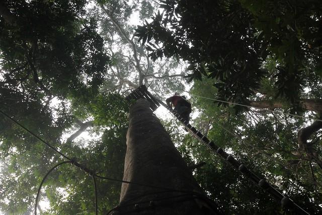 Skytrex Adventure Langkawi