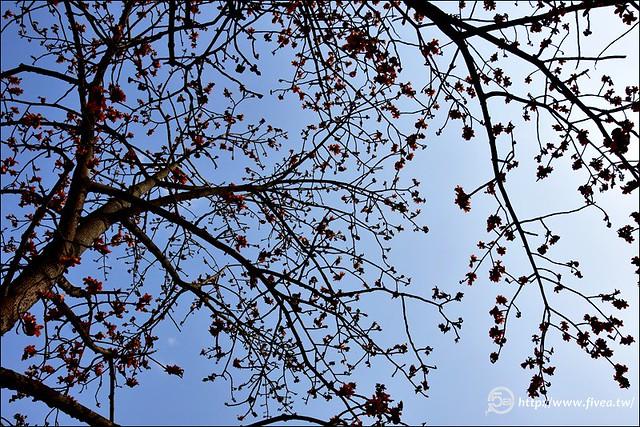 台中木棉花