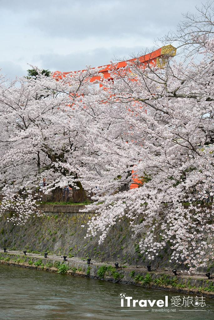 京都赏樱景点 冈崎疏水道 (31)