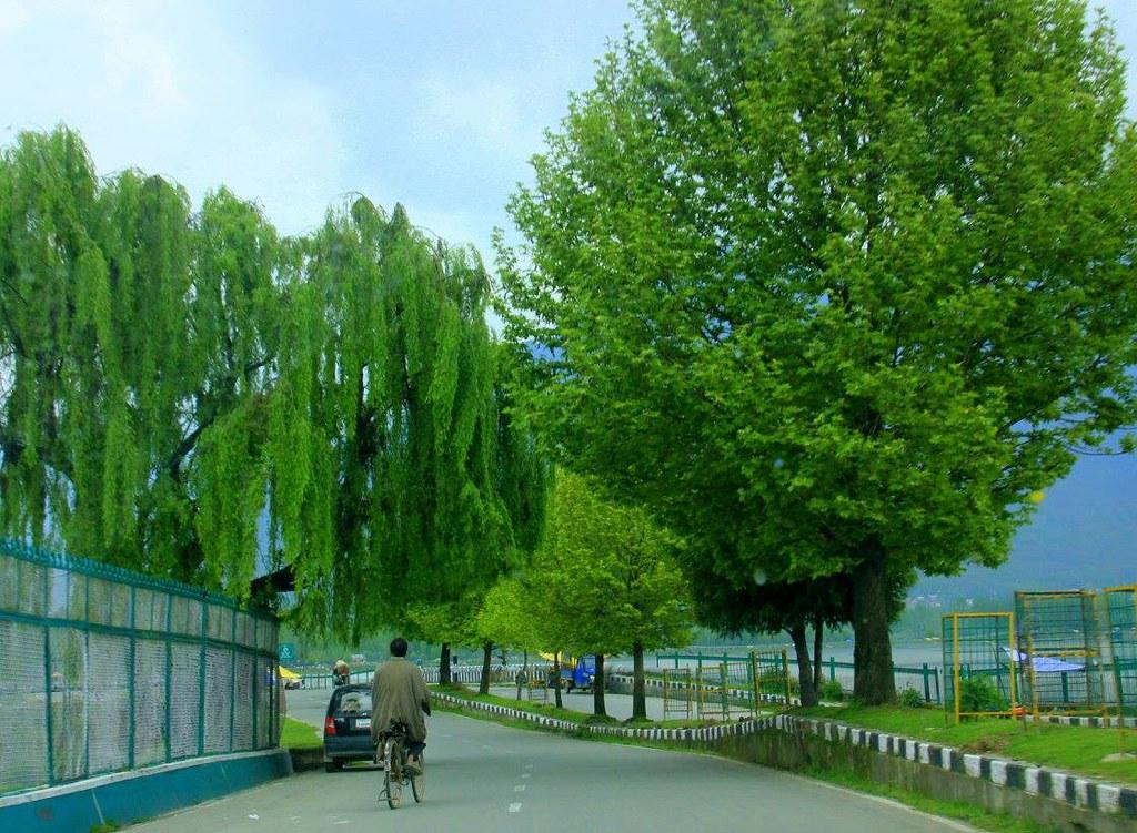 Man cycles past Dal Lake in Srinagar