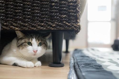 アトリエイエネコ Cat Photographer 39947552775_feb4537267 1日1猫! 3/10オープン!保護猫カフェけやきさんへ行く(1/3) 1日1猫!  高槻ねこのおうち 里親様募集中 猫写真 猫カフェ 猫 子猫 大阪 初心者 写真 保護猫カフェけやき 保護猫カフェ 保護猫 スマホ カメラ けやき Kitten Cute cat