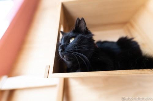アトリエイエネコ Cat Photographer 39486372580_2c3ae8070f 1日1猫!ニャンとぴあ 里親様募集中の姫子ちゃん♪ 1日1猫!
