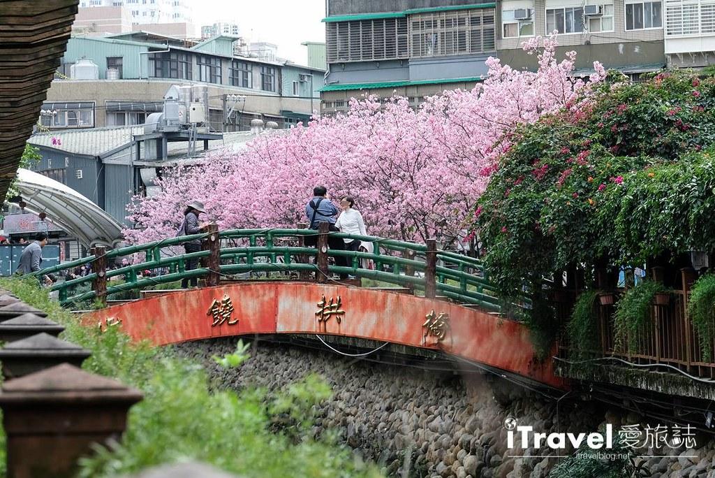 土城赏樱景点 希望之河左岸樱花 (26)