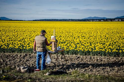 Skagit Daffodils-31