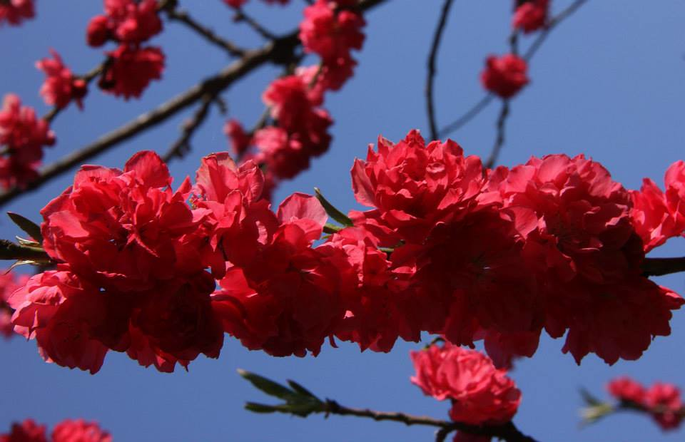 Flowers in bloom in Kashmir