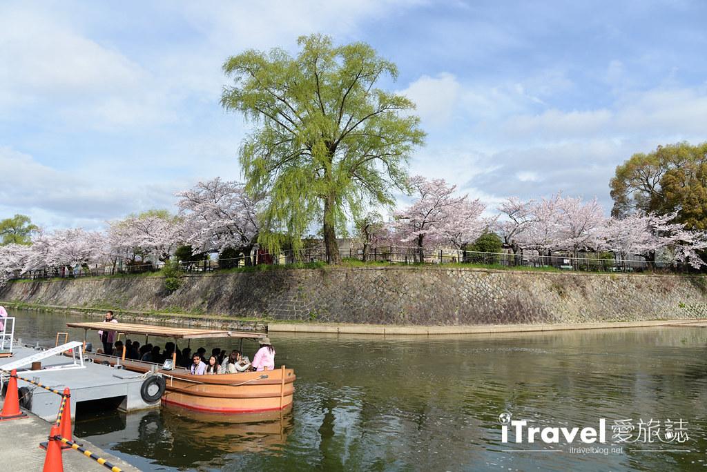 京都赏樱景点 冈崎疏水道 (4)