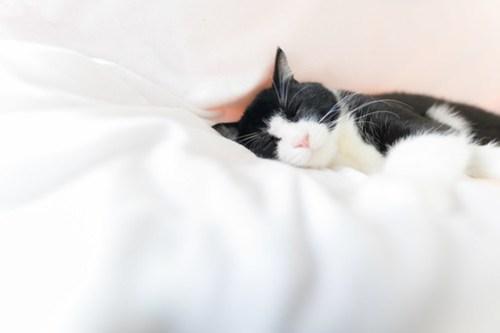 アトリエイエネコ Cat Photographer 26971816838_cc1b392491 1日1猫! 3/10オープン!保護猫カフェけやきさんへ行く(3/3) 1日1猫!  高槻ねこのおうち 里親様募集中 猫写真 猫カフェ 猫 子猫 大阪 初心者 写真 保護猫カフェけやき 保護猫カフェ 保護猫 スマホ カメラ Kitten Cute cat