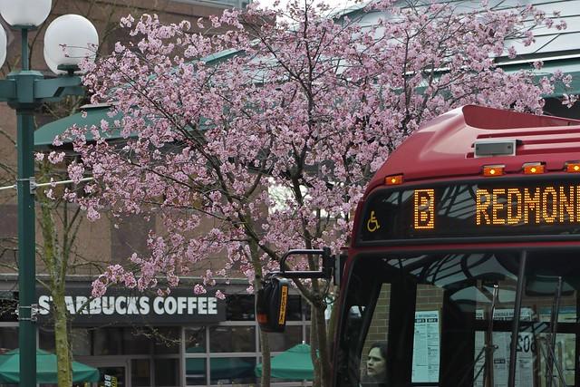 In bloom, Bellevue style