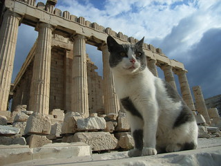 cats in greek mythology Parthenon and a cat