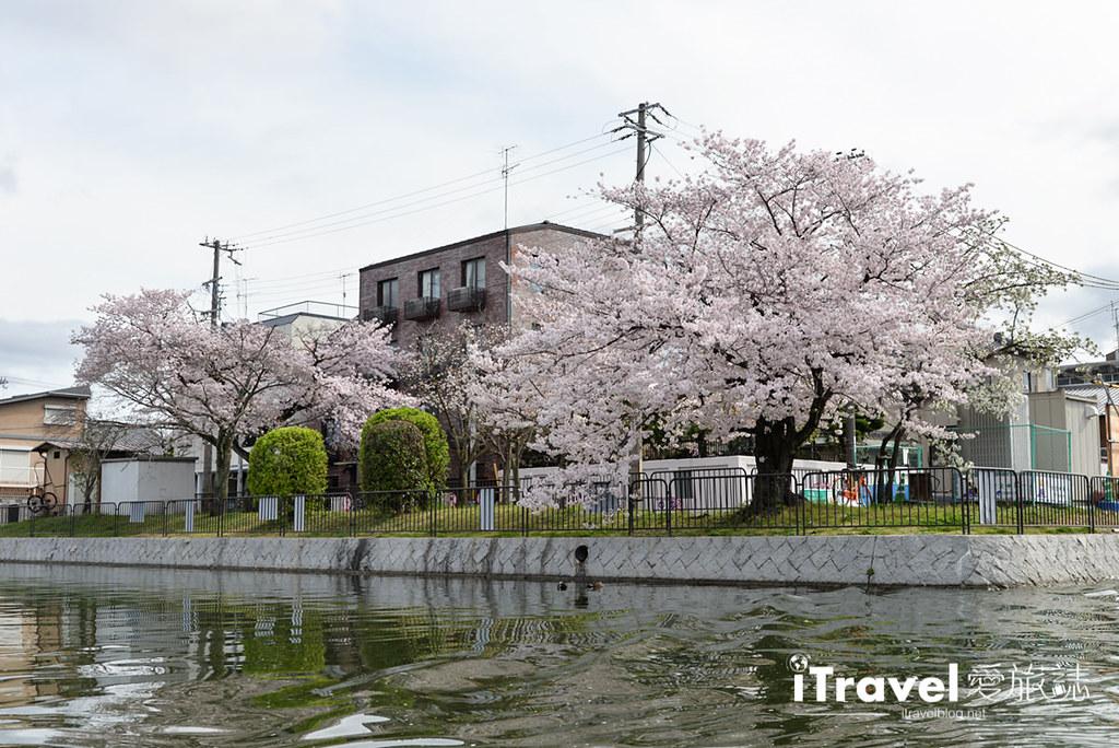 京都赏樱景点 冈崎疏水道 (19)