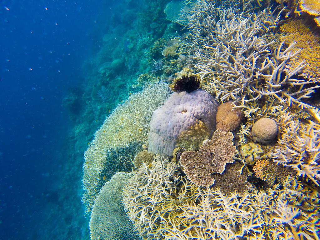 TLP_AIR_Underwater_05