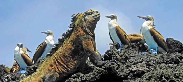Win A £12,000 Galápagos Cruise!