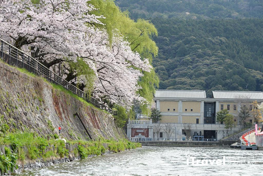 京都賞櫻景點 岡崎疏水道 (11)