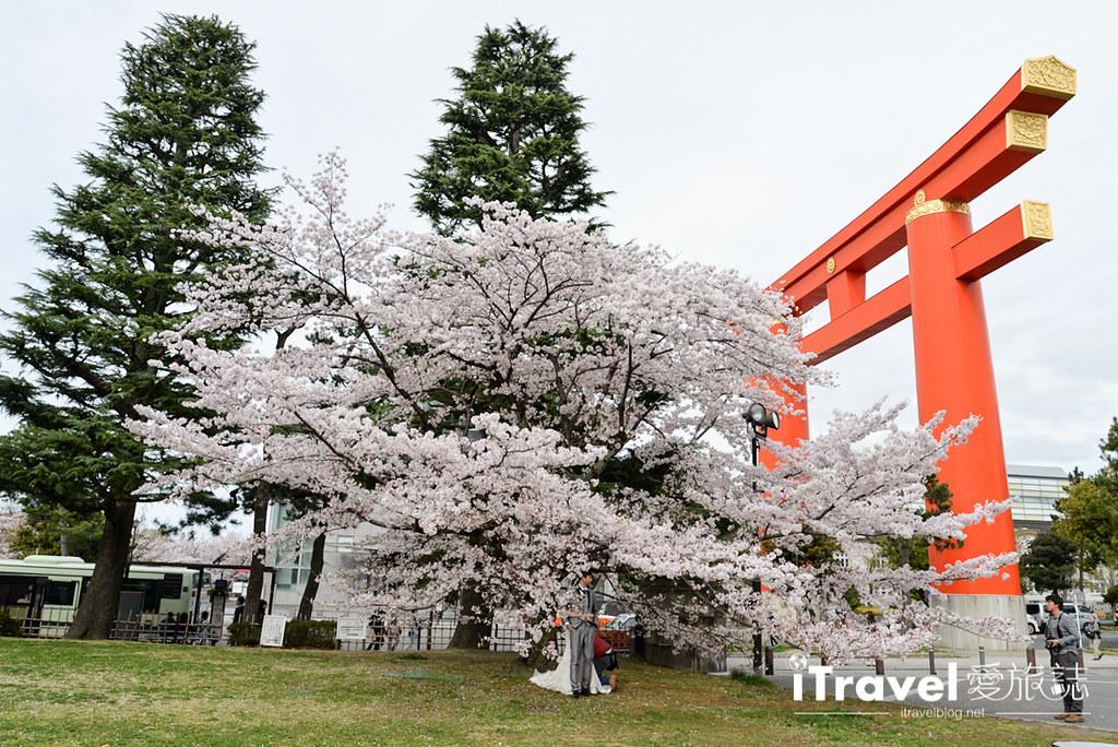 京都賞櫻景點 岡崎疏水道 (39)